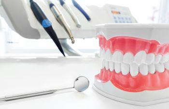 Dental Model of Gums